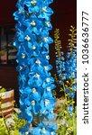 delphinium larkspur flowers | Shutterstock . vector #1036636777