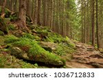 stone path in the beautiful... | Shutterstock . vector #1036712833