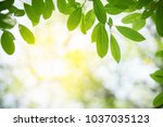 closeup nature view of green... | Shutterstock . vector #1037035123