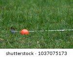 orange golf ball and putter on... | Shutterstock . vector #1037075173