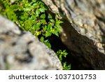 Bush Growing In A Rock Crevice