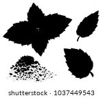 silhouettes of oregano set... | Shutterstock .eps vector #1037449543