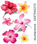 watercolor hand drawn tropical... | Shutterstock . vector #1037542273