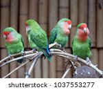 four inseparable birds sits on... | Shutterstock . vector #1037553277
