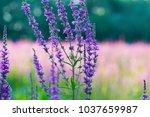 a macro closeup background of...   Shutterstock . vector #1037659987