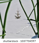 simply nature. white winter... | Shutterstock . vector #1037704597