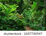 tropical garden  queensland ...   Shutterstock . vector #1037730547