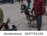 anchorage  alaska   usa   march ... | Shutterstock . vector #1037741143