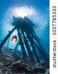 scuba diver swimming underneath ... | Shutterstock . vector #1037785333