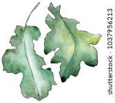 Oak Leaves In A Watercolor...