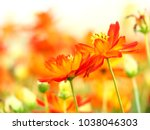 orange flower in beautiful... | Shutterstock . vector #1038046303