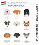 dogs by country of origin.... | Shutterstock .eps vector #1038262057