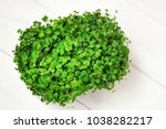 fresh growing salad in soil pod ... | Shutterstock . vector #1038282217