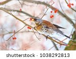 forest bird saved from... | Shutterstock . vector #1038292813