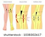 vector illustration diagram.... | Shutterstock .eps vector #1038302617