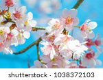 beautiful pink cherry blossom... | Shutterstock . vector #1038372103