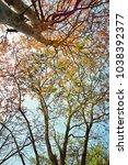 golden green leaves and... | Shutterstock . vector #1038392377