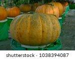 pick the pumpkin | Shutterstock . vector #1038394087