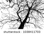 silhouette leaves and branches... | Shutterstock . vector #1038411703