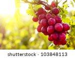 Red Grape