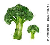 broccoli on white background.... | Shutterstock . vector #1038498757
