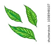 green leaves set isolated in... | Shutterstock .eps vector #1038548107