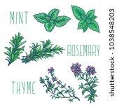 mint leaf  rosemary  thyme herb ... | Shutterstock .eps vector #1038548203