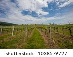 Small photo of green spring vine yards landscape
