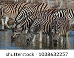 herd of zebras at a waterhole... | Shutterstock . vector #1038632257