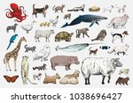 illustration drawing style of... | Shutterstock . vector #1038696427