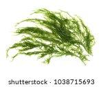 Laminaria  Kelp  Seaweed...