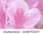 blur floral background lush... | Shutterstock . vector #1038753157