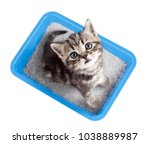 cat top view sitting in litter... | Shutterstock . vector #1038889987