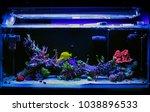 saltwater coral reef fish tank | Shutterstock . vector #1038896533