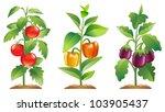 tomato plant  bell pepper plant ...   Shutterstock .eps vector #103905437