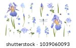 Vector Botanical Set Of Blue...