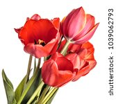 Tulip Flowers Isolated On A...
