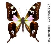 Small photo of Purple spotted swallowtail (Graphium weiskei) is a swallowtail butterfly living in the mountains of New Guinea. Isolated on white