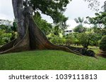 Small photo of GUADELOUPE, CARIBBEAN, FRANCE - FEBRUARY 9, 2018: Big old Fromager tree grows in Botanical Garden, Guadeloupe, Deshaies.