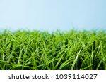an image of grass | Shutterstock . vector #1039114027