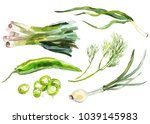 watercolor painted collection... | Shutterstock .eps vector #1039145983