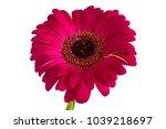 big beautiful flowers of... | Shutterstock . vector #1039218697