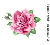 single pink rose  buds and... | Shutterstock .eps vector #1039298857