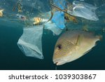 Fish And Plastic Pollution....