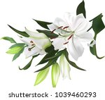 illustration with light lily... | Shutterstock .eps vector #1039460293
