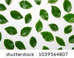 green leaves isolated on white... | Shutterstock . vector #1039564807