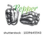 bell pepper hand drawn art... | Shutterstock .eps vector #1039645543