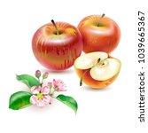 vector realistic  illustration... | Shutterstock .eps vector #1039665367