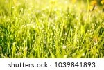 spring nature background with... | Shutterstock . vector #1039841893