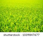 green grass field nature... | Shutterstock . vector #1039847677